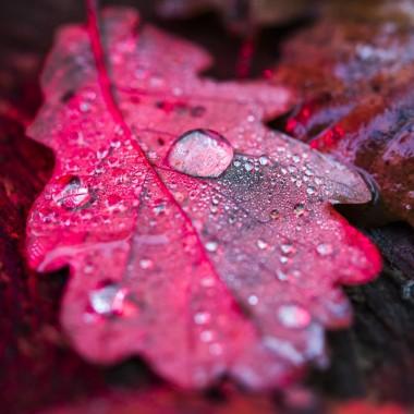 Web-Nature-Vincent-Zobler | Photographe à Nancy-4