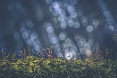 Web-Nature-Vincent-Zobler | Photographe à Nancy