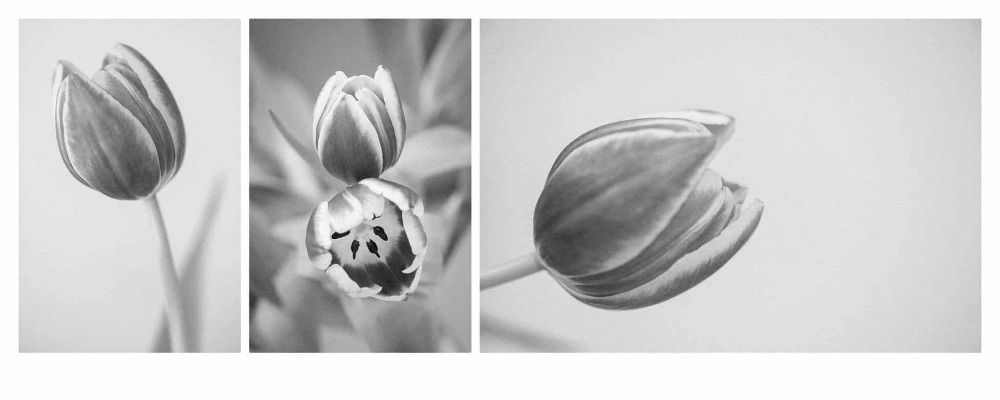 Photograph White