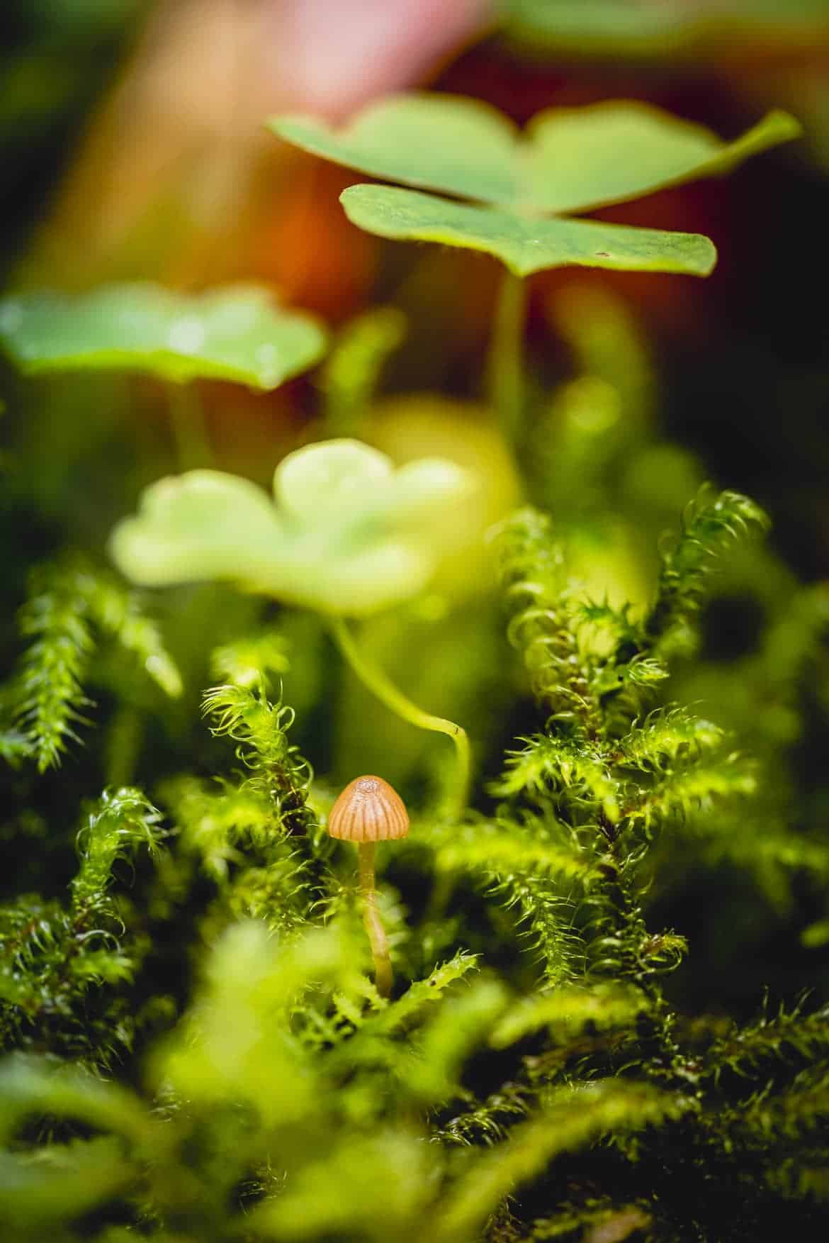 Vincent Zobler - Photographe Pro Green