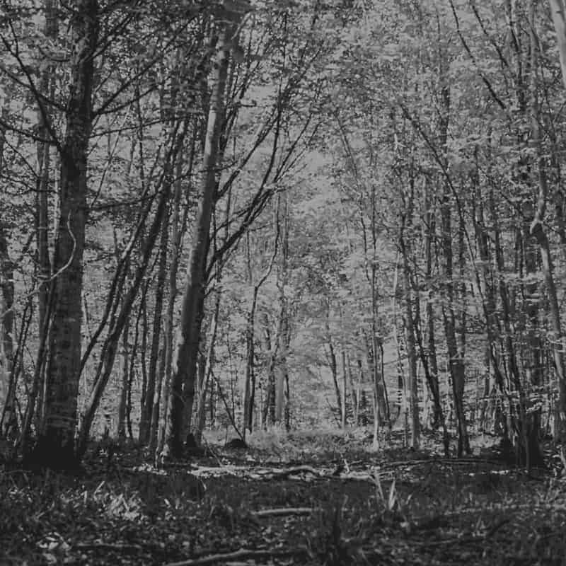 Vincent Zobler - Photographe Pro Tree