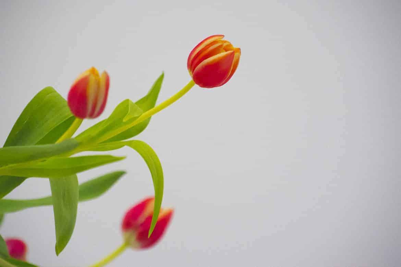 Vincent Zobler - Photographe Pro Flower