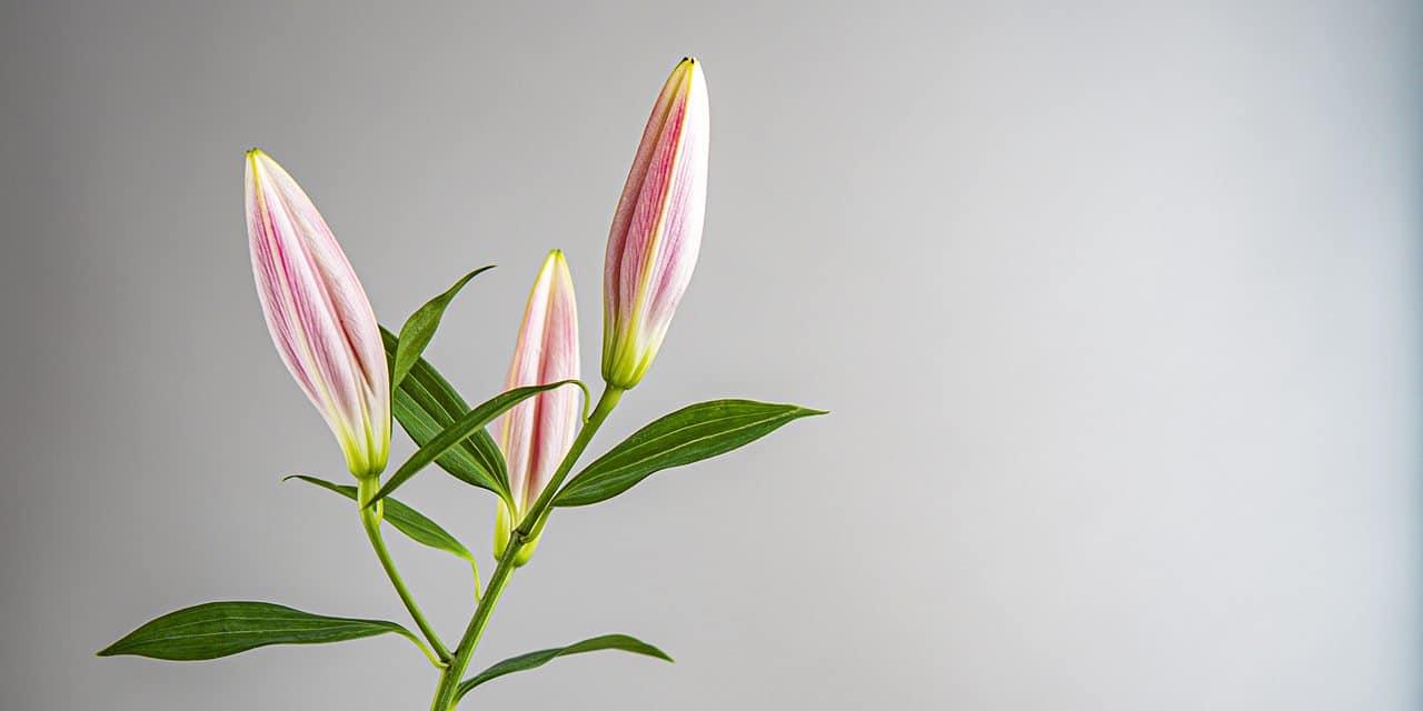 Variations Florales